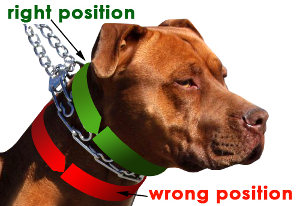 How to Attach a Dog Prong Collar